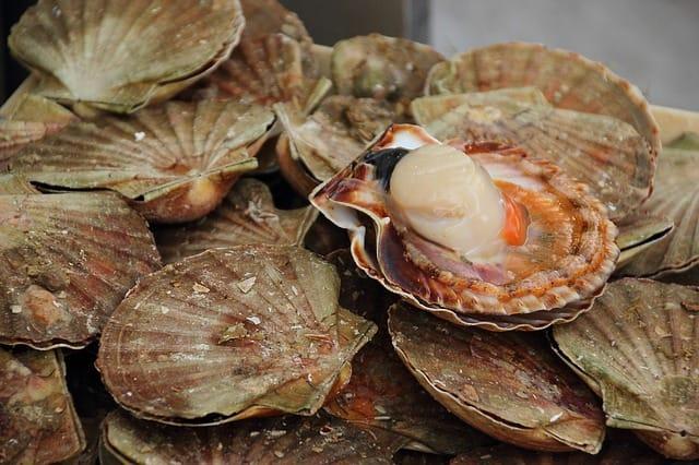 recetas-jamon-iberico-verano
